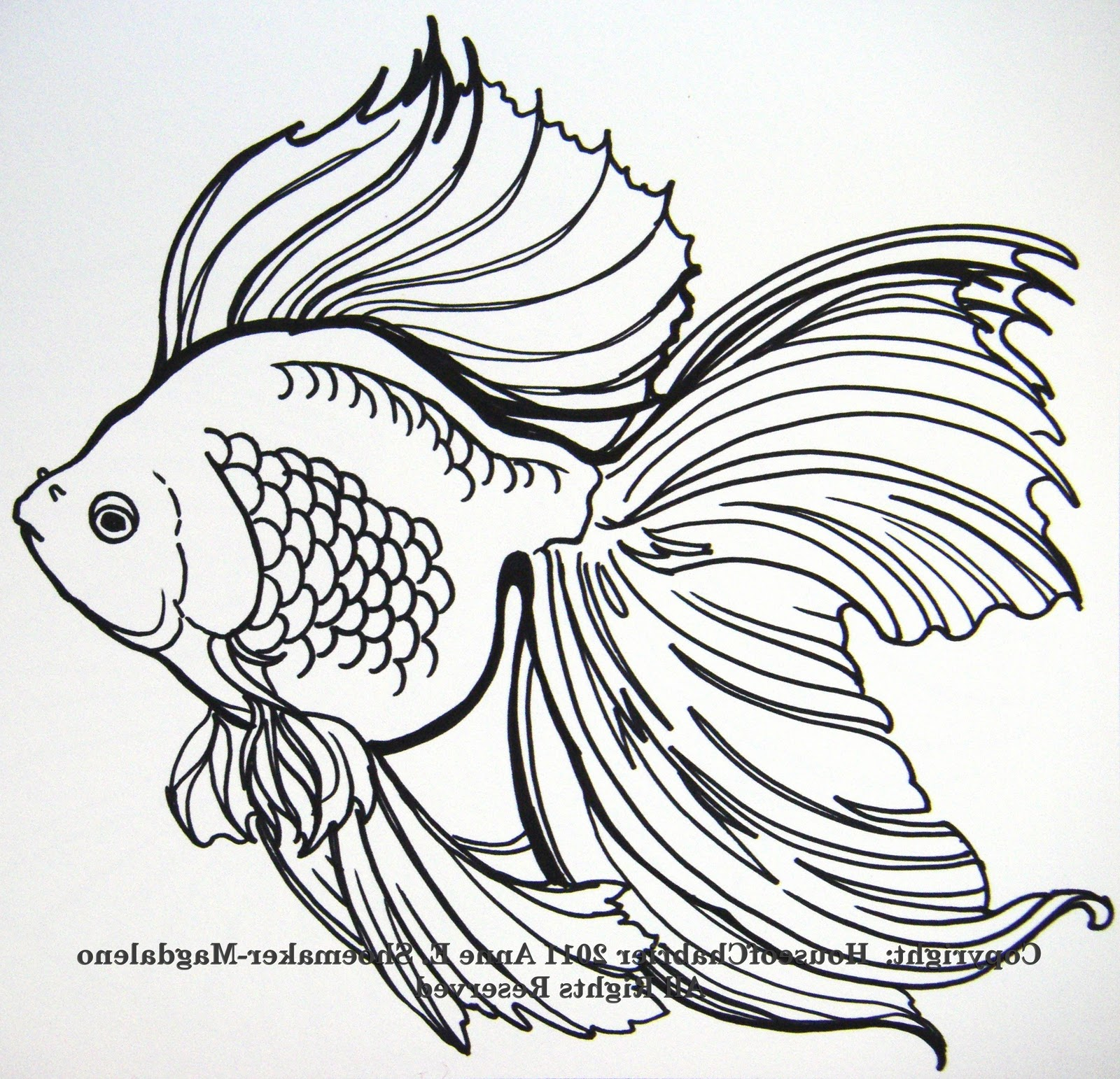 Drawn gold fish Paintings: 2011 Annie's  February