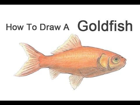 Drawn gold fish How Draw from YouTube a
