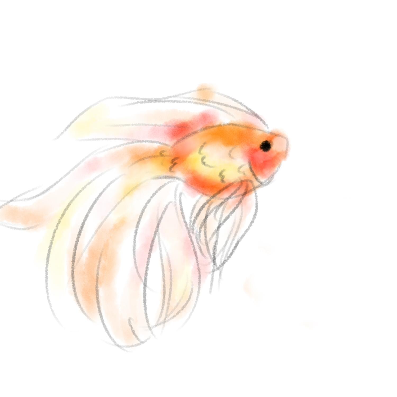 Drawn gold fish Goldfish drawing Goldfish Drawing photo#23