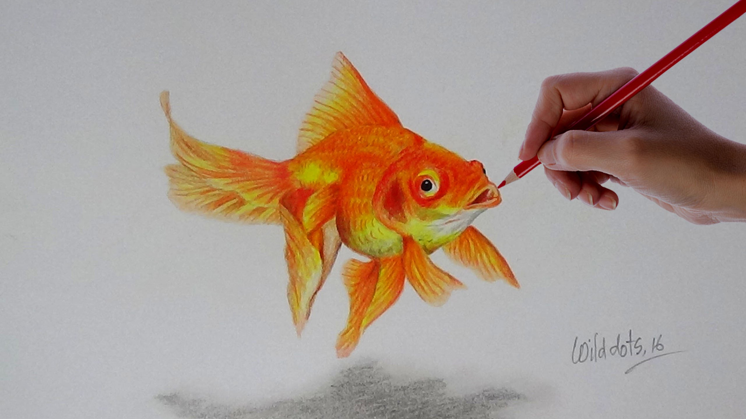 Drawn gold fish Colored Realistic Simple With Drawing