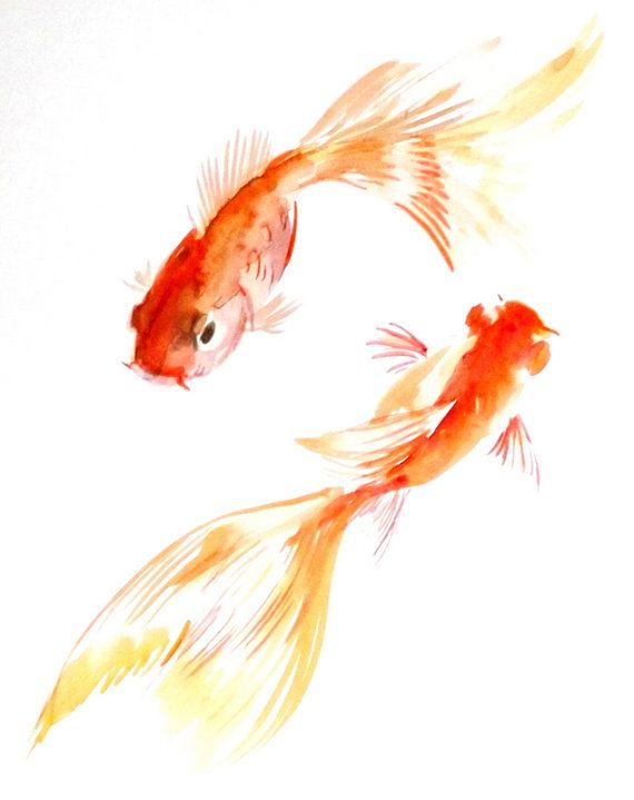 Drawn gold fish chinese Goldfish Goldfish 20+ 8 by
