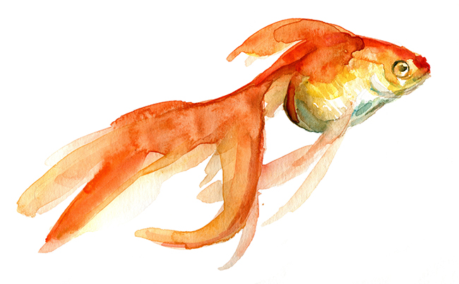 Drawn gold fish chinese Another pencil goldfish drawing klein