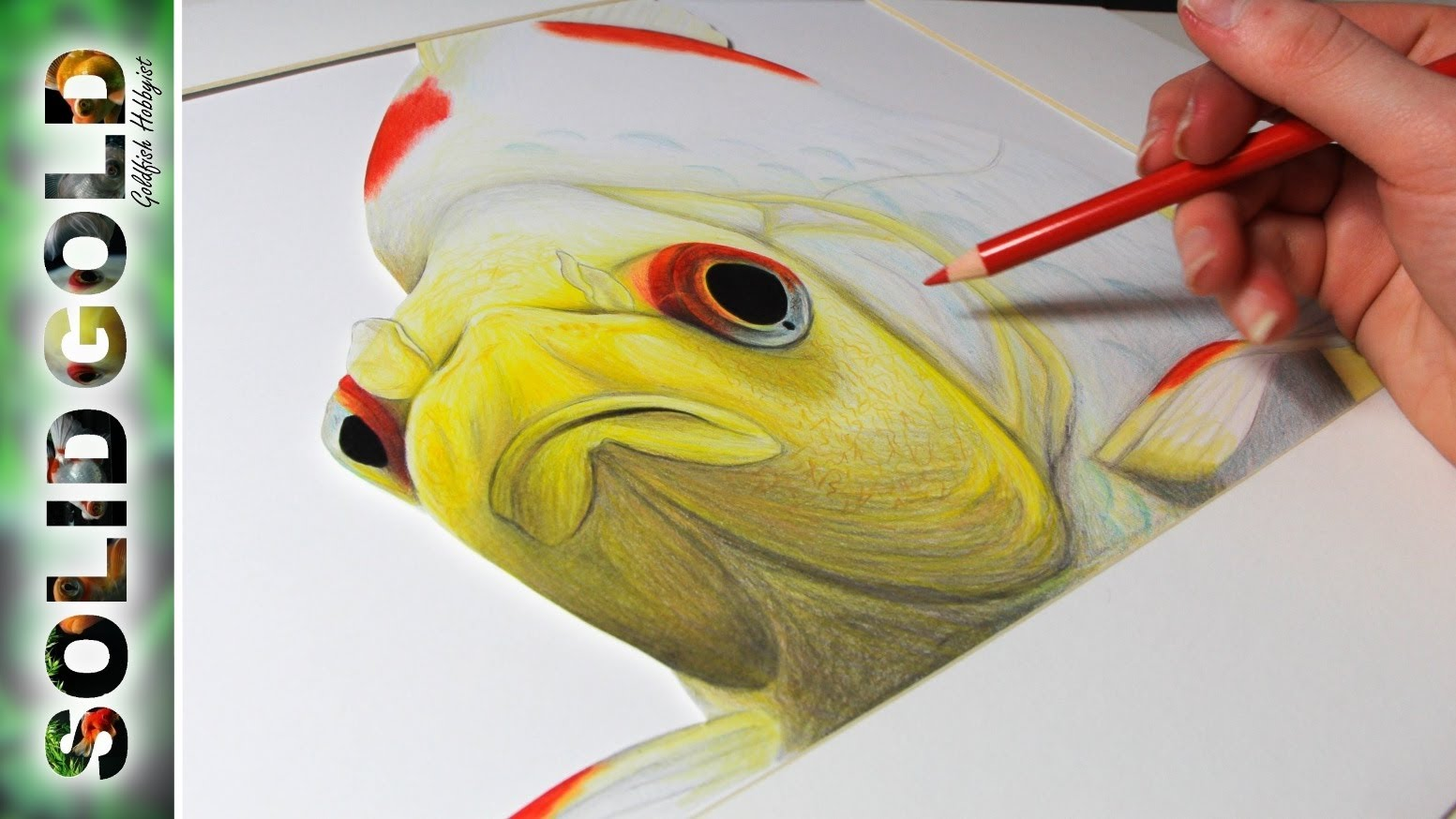 Drawn goldfish golden fish YouTube Solid Drawing Gold