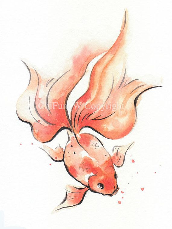 Drawn goldfish fish swimming Best by type images fish
