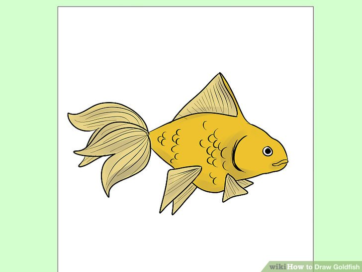 Drawn goldfish small fish How Steps 9 Pictures) Goldfish: