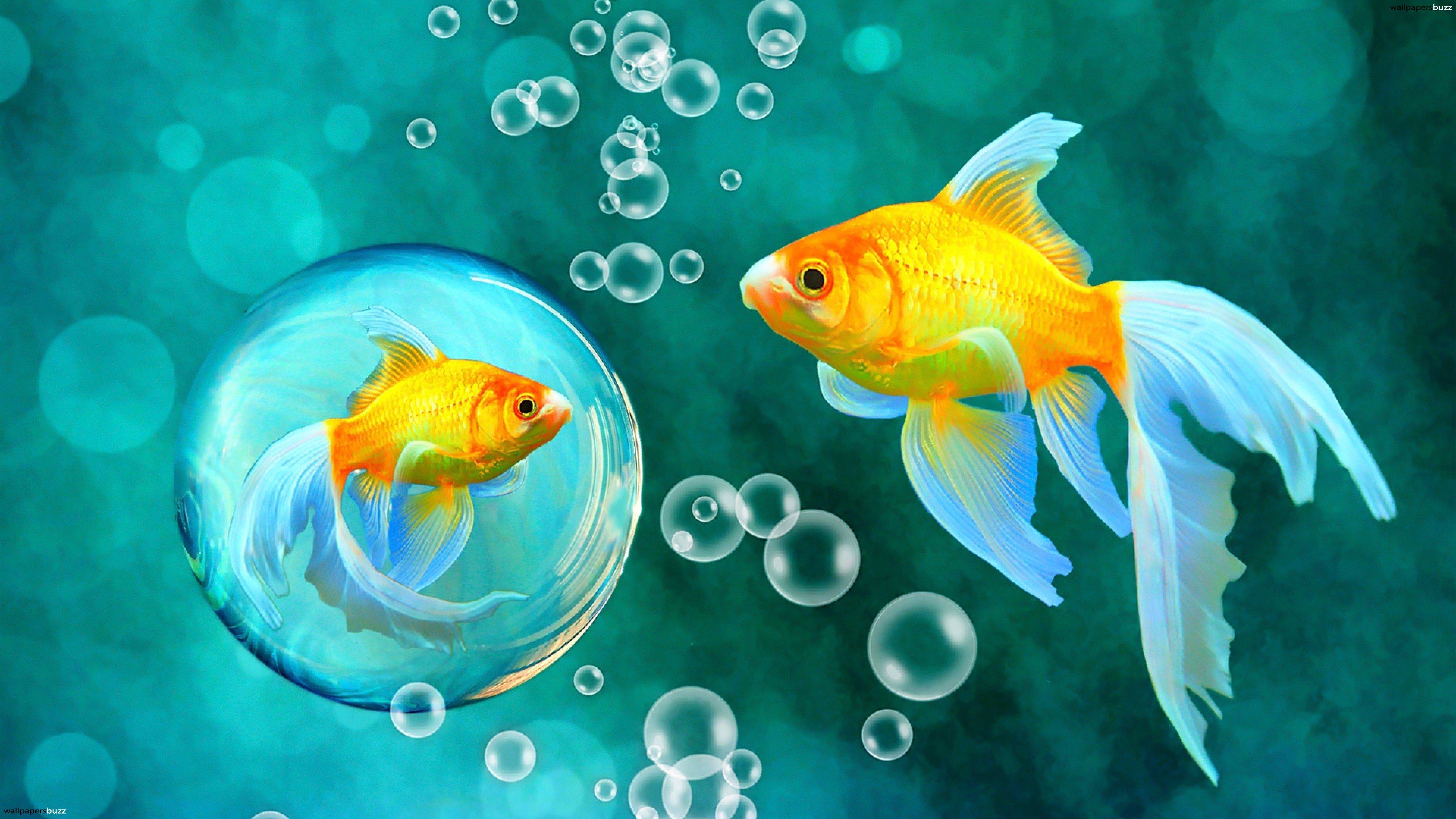 Drawn goldfish fish swimming Wallpaper in are You HD