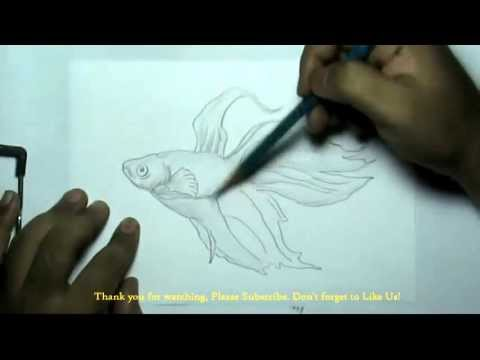 Drawn gold fish transparent background Draw How How Gold to