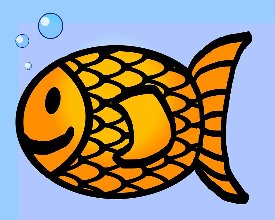 Drawn gold fish transparent background Fish Free Goldfish Goldfish photo