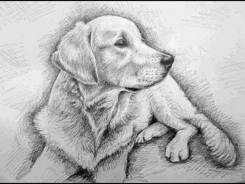 Drawn puppy realistic Draw How YouTube (Golden Retriever)