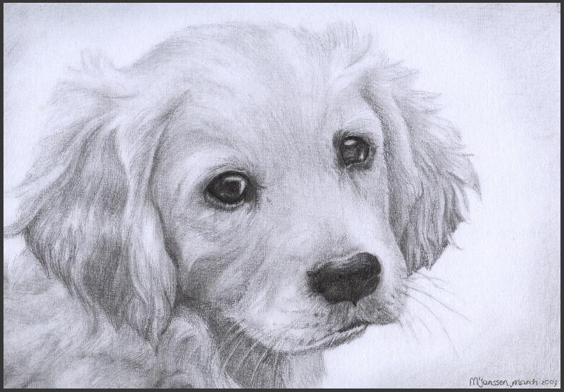 Drawn puppy golden retriever puppy Puppy by Retriever WiccanSoul WiccanSoul