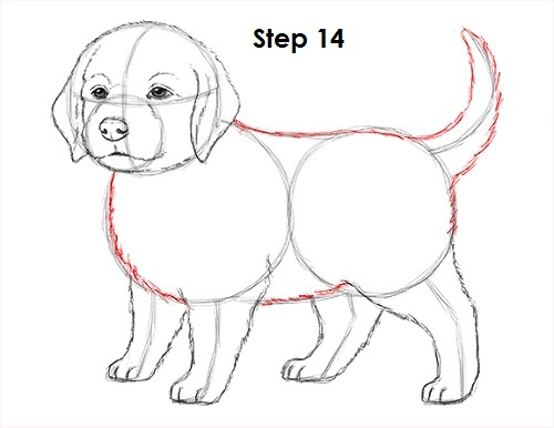 Drawn golden retriever body Draw Draw Puppy Dog How