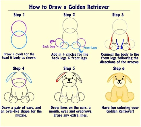 Drawn golden retriever body Powered  Golden Retriever Wikia