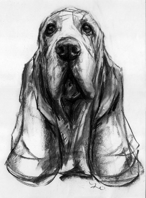 Drawn puppy charcoal To Creative Drawings Charcoal And