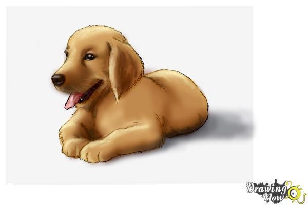Drawn golden retriever chibi Draw DrawingNow Golden Retriever Step
