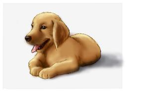 Drawn puppy golden retriever puppy How a Puppy Draw Temple