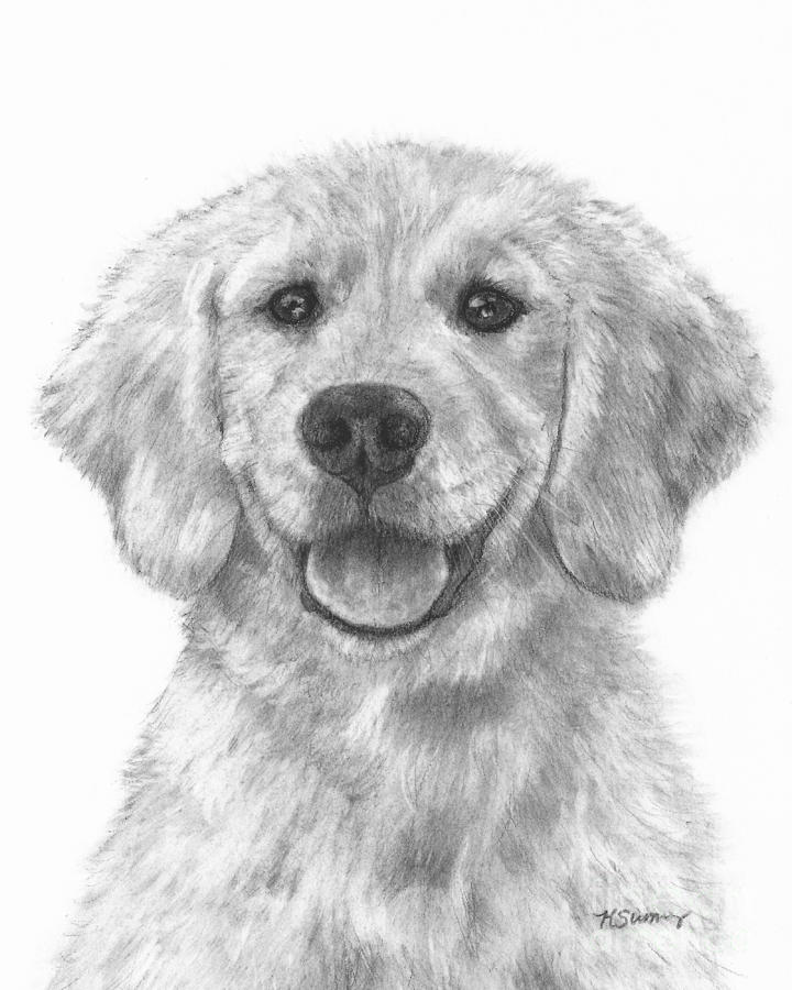 Drawn puppy golden retriever puppy Art Drawing Realistic Drawing Golden