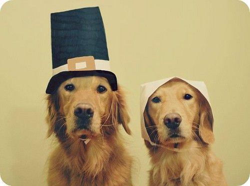 Drawn golden retriever happy thanksgiving Best Golden Retrievers RetrieversDoggiesAutumnThanksgiving 40