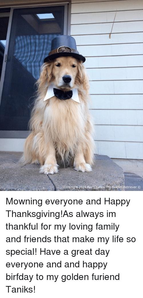 Drawn golden retriever happy thanksgiving Retriever Copyright 2016 Ray