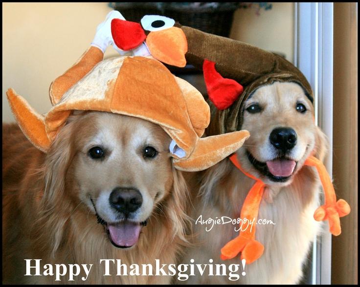 Drawn golden retriever happy thanksgiving On Golden Golden Retrievers in