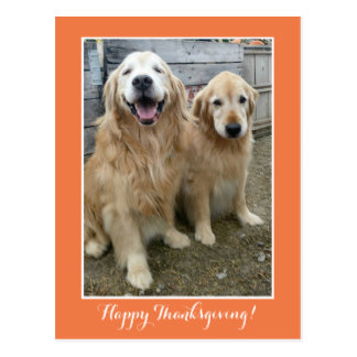 Drawn golden retriever happy thanksgiving Postcard Smiling Golden Dogs Two