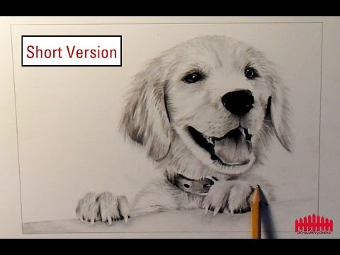 Drawn husky animal fur Short draw Version Dog fur)