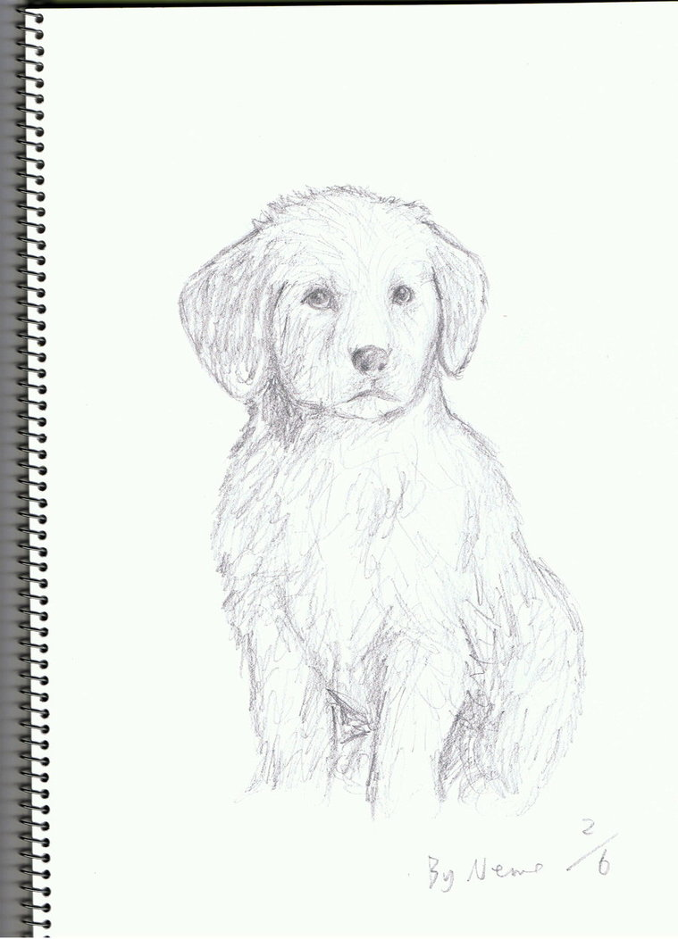 Drawn puppy golden retriever puppy Puppy Drawings Retriever Golden