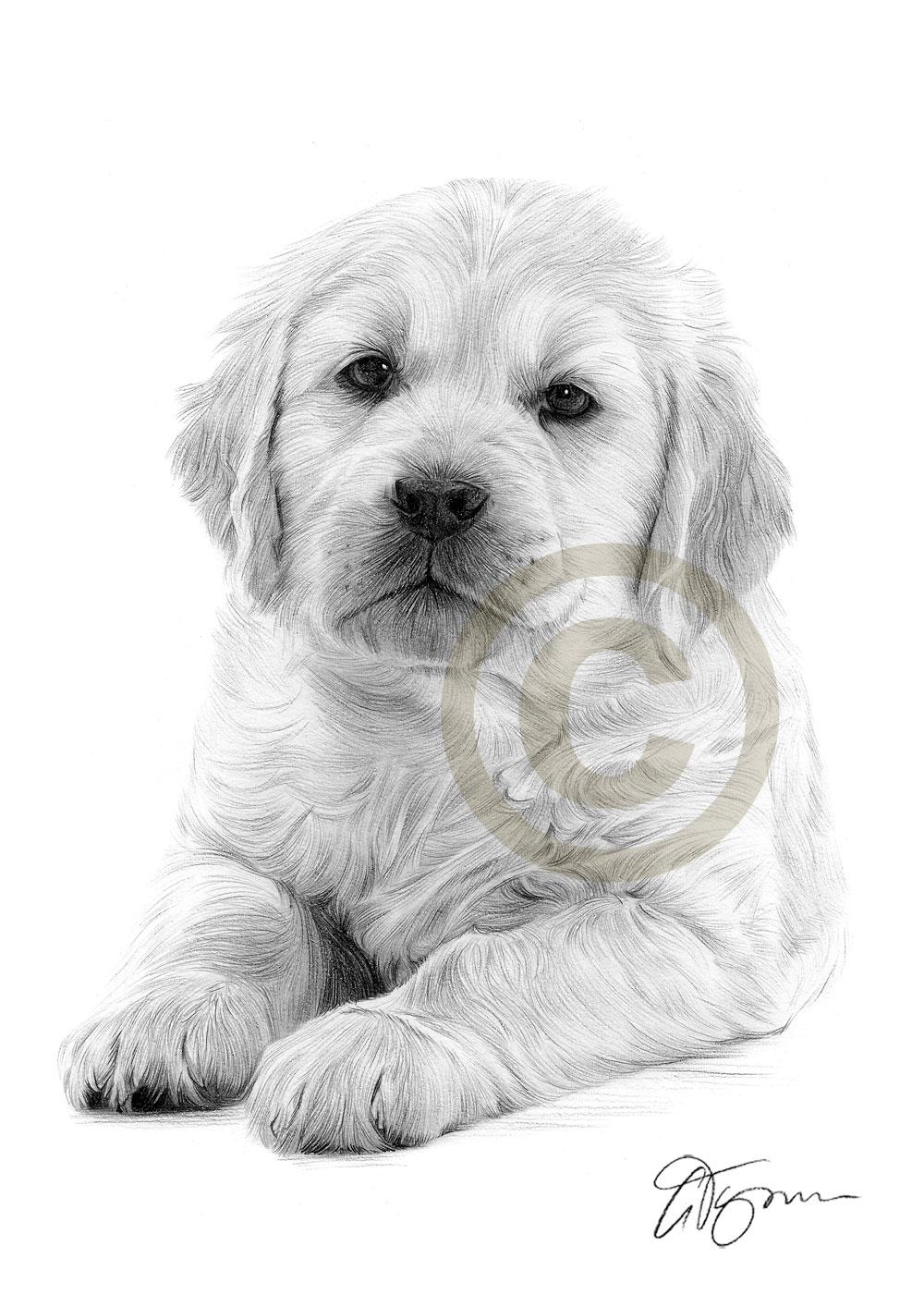 Drawn puppy golden retriever puppy Only Dog a  puppy