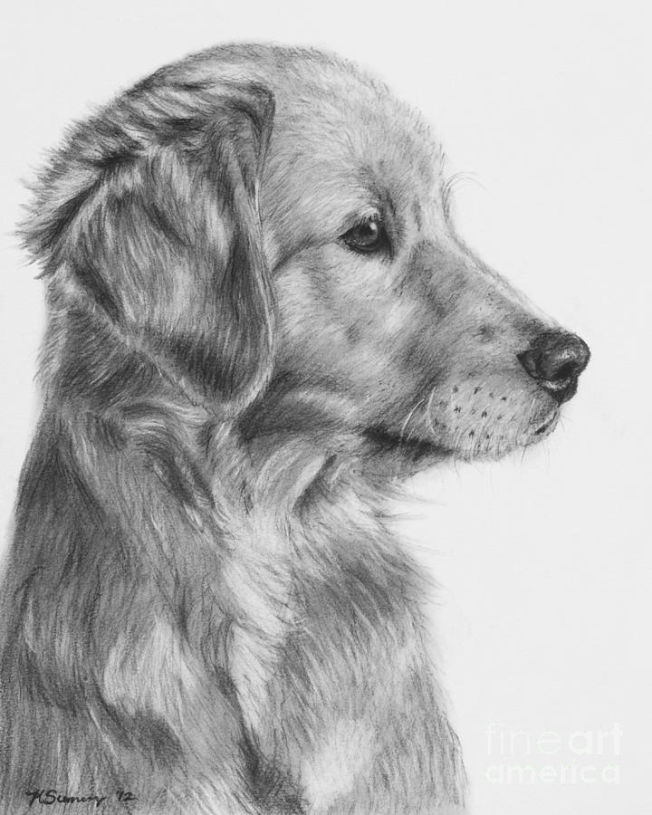 Drawn puppy golden retriever puppy Puppy One In Retriever Golden