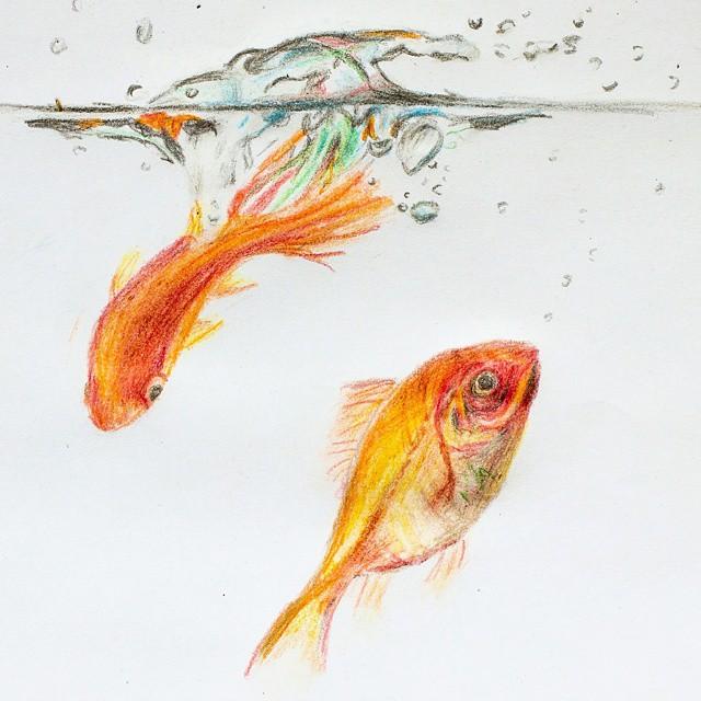 Drawn goldfish fish swimming On draw by drawing it
