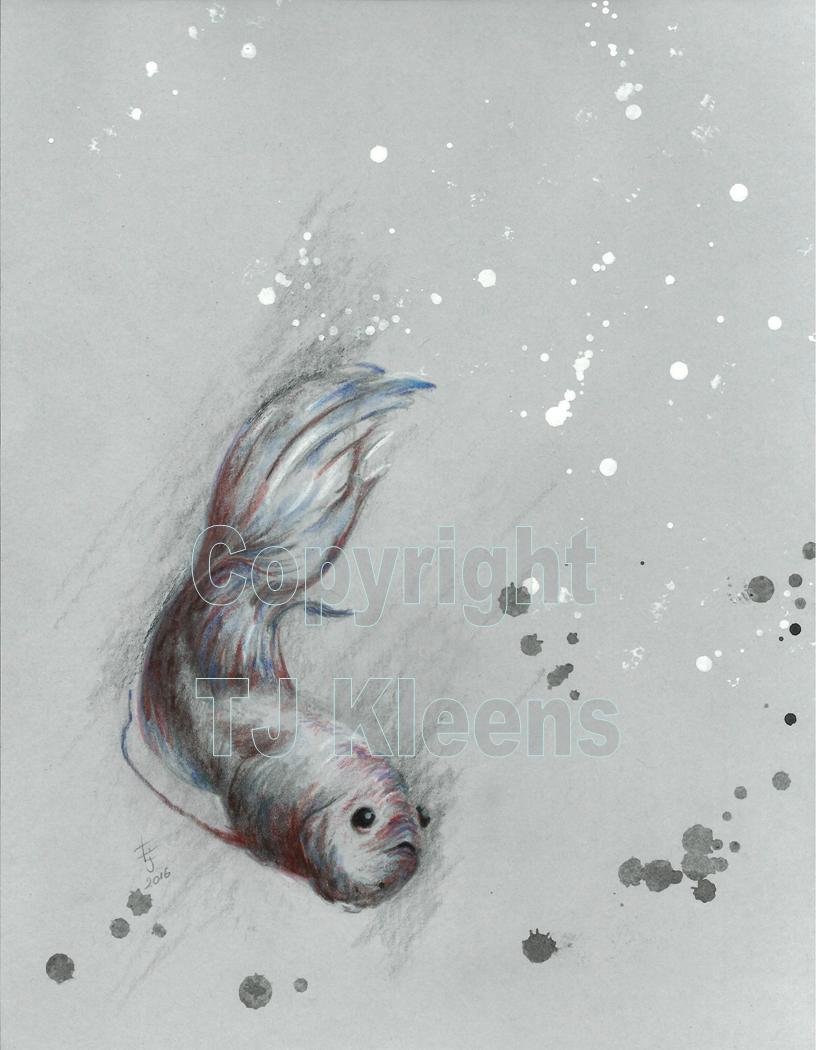 Drawn goldfish coloured fish Modern Graphite Painting TJ Fish