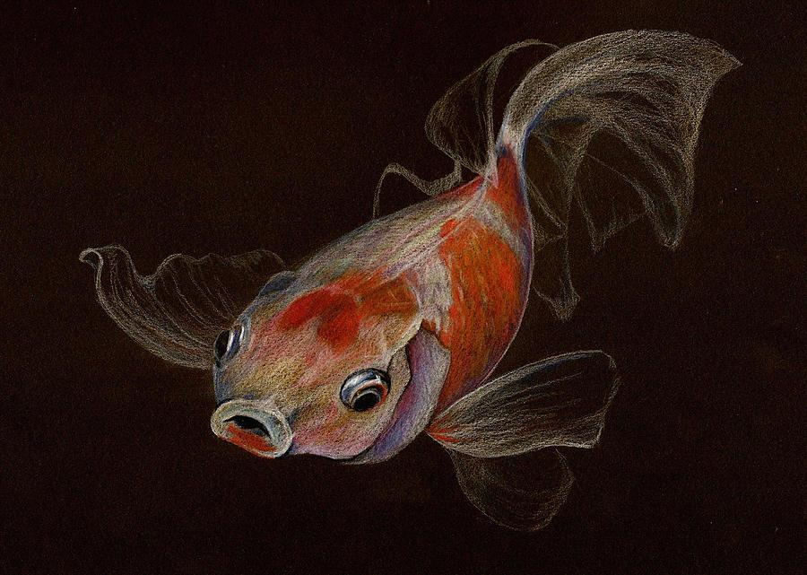 Drawn goldfish fancy goldfish Goldfish Drawings Drawing Goldfish