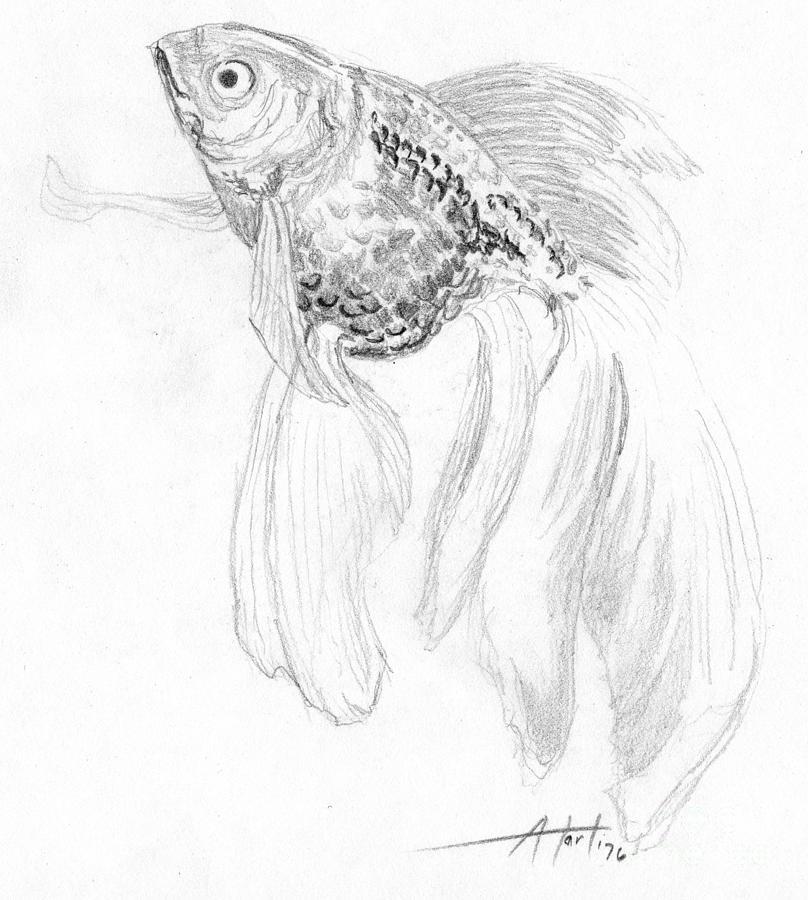 Drawn goldfish fancy goldfish By Drawing Fish by Van
