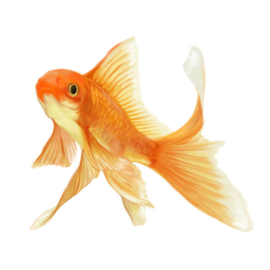 Drawn goldfish fancy goldfish Cute Cute photo#11 Drawing goldfish