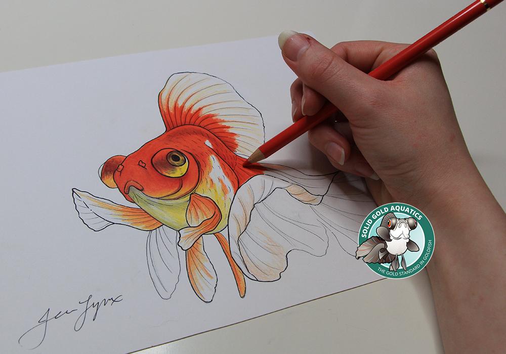 Drawn goldfish fish swimming News?? Debunking UPDATES //