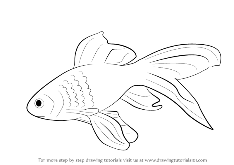 Drawn goldfish golden fish A Step Step How to