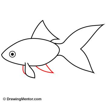 Drawn goldfish small fish To Mentor How Goldfish goldfish