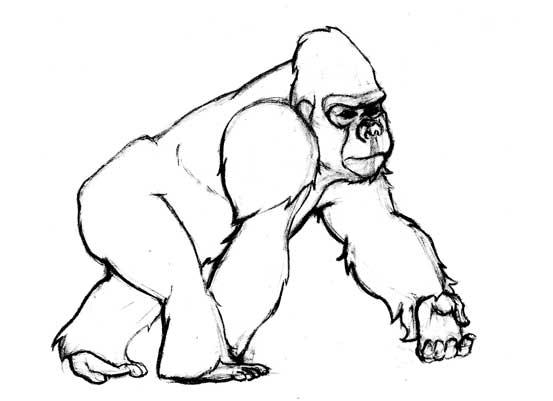 Drawn gorilla Gorilla drawing Sketch sketch Drawing
