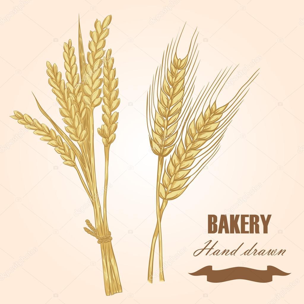 Drawn grain outline Set and Illustration Stock drawn