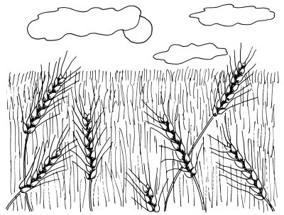 Drawn grain outline And Slender the in the