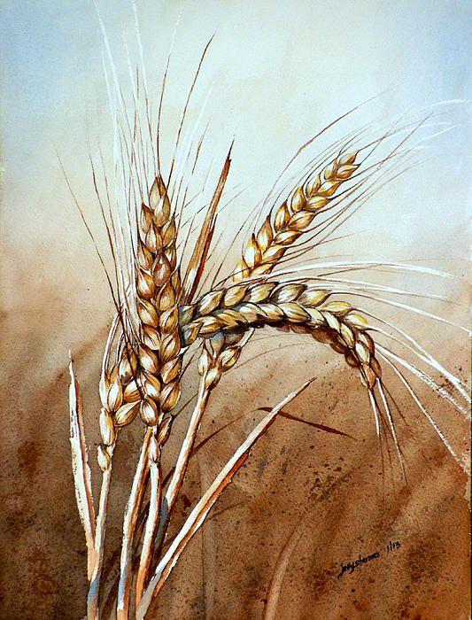 Drawn grain wheat stalk By Wheat Wheat Wheat on