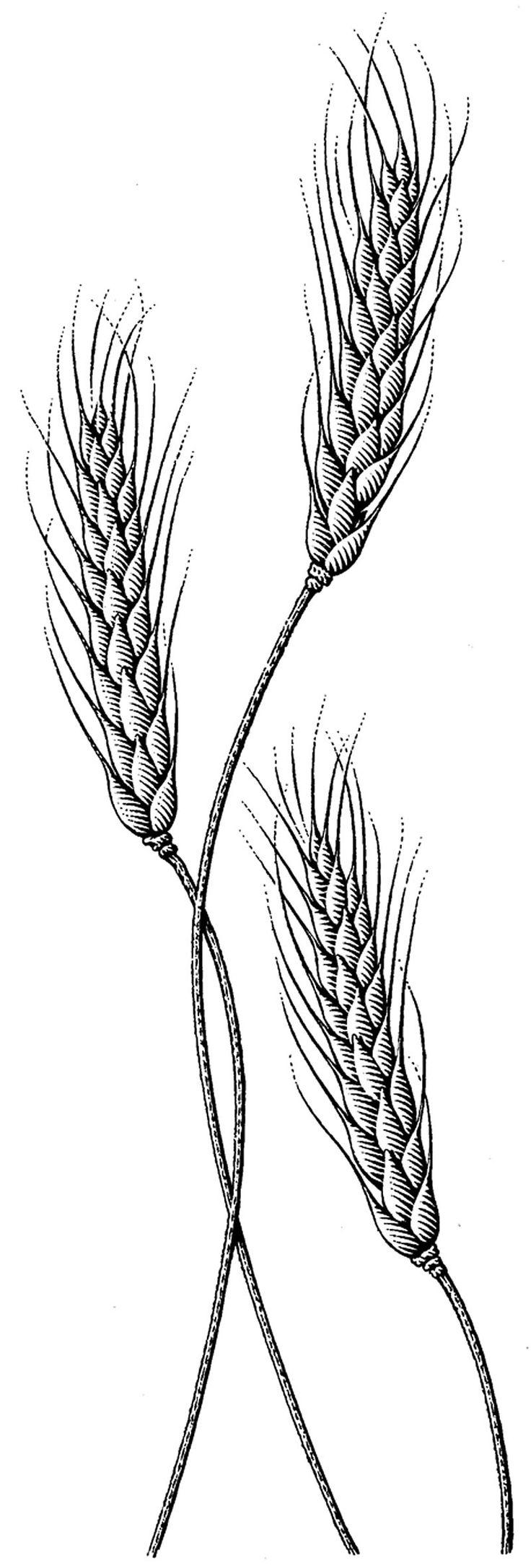 Drawn grain wheat stalk Tattoo Intertwind Best wrist designs