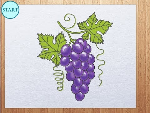 Drawn grape golden To draw to draw How