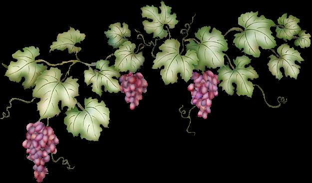 Drawn grape animated Collection Cerebral Grapes vine