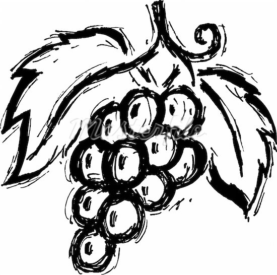 Grape clipart drawn Grapes Clipart Clipart Clipart Images