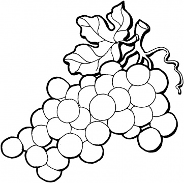 Grape clipart coloring page #9