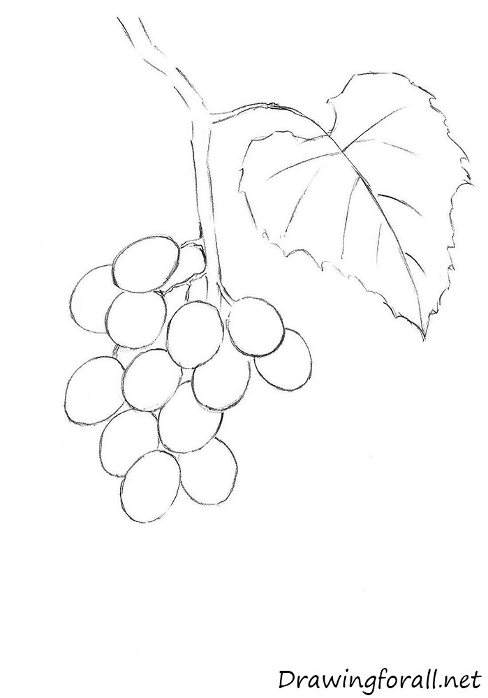 Drawn grape easy To net How Grapes DrawingForAll
