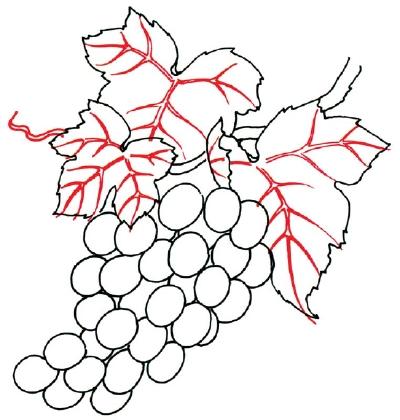 Drawn grape easy Grapes to Steps  5