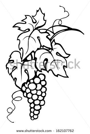 Drawn leaves vine Bodegas cecilia muller on more!