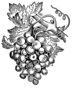 Drawn vine artistic #8