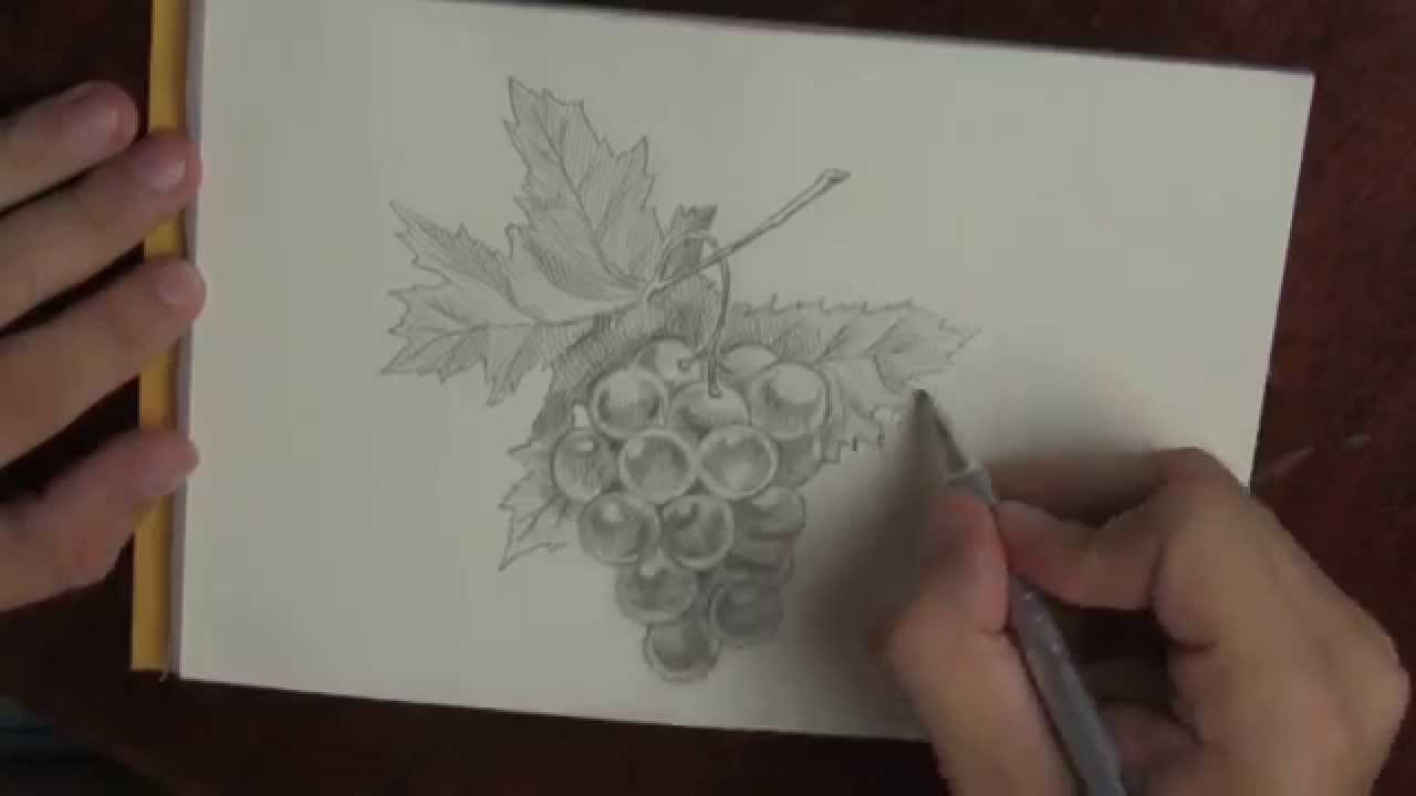 Drawn grapes pencil sketch Of bunch  grapes Fast